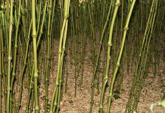 Bambus:Bambuspark / Bambooparc / Bambouparc Mr. Bonfils-Frankreich-nearly Toulouse
